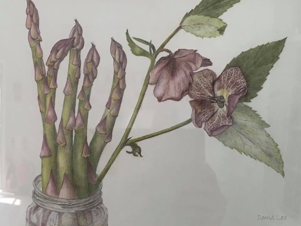 Ventnor Botanical Artists